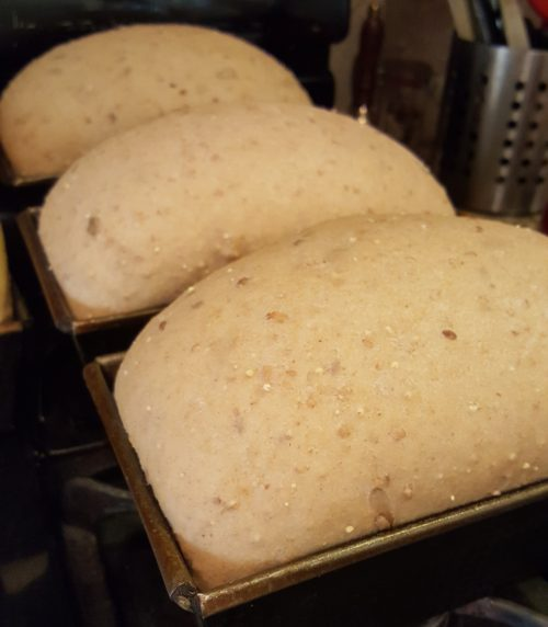 whole-wheat bread baking